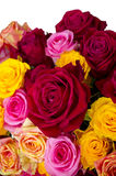 Multicolored roses Stock Images