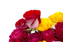 Multicolored roses Royalty Free Stock Images