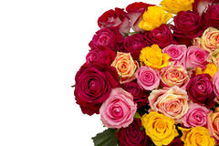 Multicolored roses Royalty Free Stock Photography
