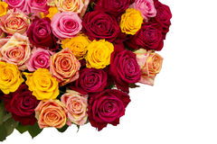 Multicolored roses Stock Photography
