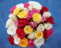 Multicolored roses bouquet of flowers isolated on blue backgroun Royalty Free Stock Images