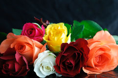Multicolored Roses Close Up Stock Image