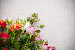 Multicolored roses on linen fabric Royalty Free Stock Image