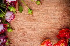 Multicolored roses on a wooden board Stock Images