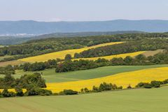 Multicolored rural landscape, agricultural fields. Blue sky, green wheat, yellow rape. stock photo