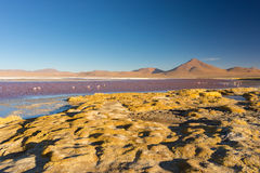 Multicolored Salt Lake with flamingos on the Bolivian Andes Stock Photography