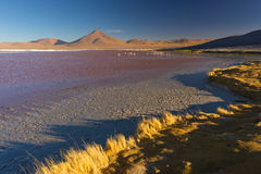 Multicolored Salt Lake with flamingos on the Bolivian Andes Stock Photo