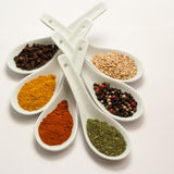 Multicolored spices in white spoons Royalty Free Stock Images