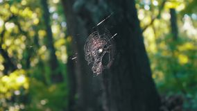Multicolored spider web poured into the sun in the forest. Spider wove spider webs stock video