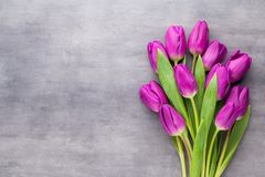 Multicolored spring flowers, tulip on a gray background. Multicolored spring flowers, tulip on a gray background Stock Image