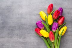 Multicolored spring flowers, tulip on a gray background. Multicolored spring flowers, tulip on a gray background Stock Images