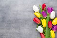 Free Multicolored Spring Flowers, Tulip On A Gray Background. Stock Images - 113555884