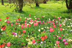 Multicolored springlike flowerbed in the park Royalty Free Stock Photography