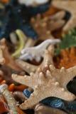 Multicolored starfish souvenirs Stock Image