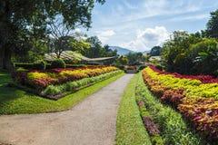 Multicolored steeg van bomen en bloemen Koninklijke Botanische Tuinen, stock afbeelding