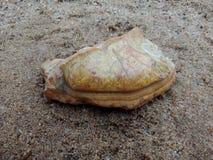 Multicolored steen met textuur op het zand geweven behang als achtergrond, strand Oceaan royalty-vrije stock fotografie