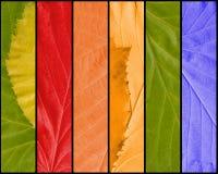 Multicolored Textuur van Bladeren royalty-vrije illustratie