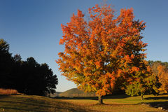 Multicolored tree. On the fringe of the forest Royalty Free Stock Photos