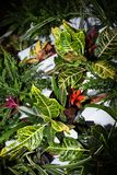 Multicolored tropical plants with stiff shadows royalty free stock photography