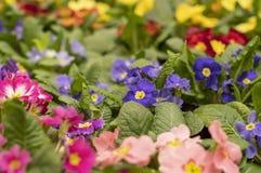 Multicolored tuinbloemen in het park stock fotografie