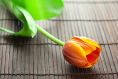 Multicolored tulip lying on a bamboo mat Royalty Free Stock Images