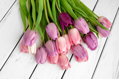 Multicolored tulips background Stock Images