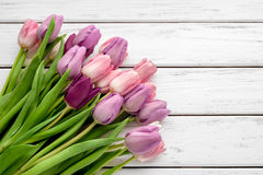 Multicolored tulips background Royalty Free Stock Images