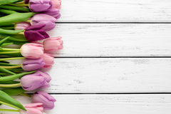 Multicolored tulips background Royalty Free Stock Image