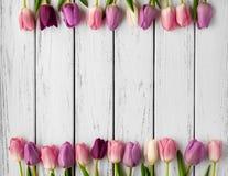 Multicolored tulips background Stock Photo