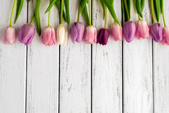 Multicolored tulips background Royalty Free Stock Photos