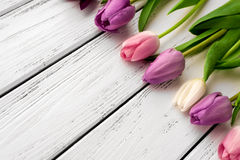 Multicolored tulips background Royalty Free Stock Photography