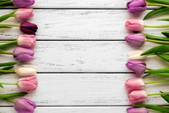 Multicolored tulips background Stock Photography
