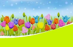 Multicolored tulips on a blurred meadow background vector illustration