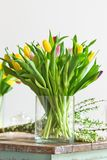 Multicolored tulips flowers bouquet in a glass vase. On a wooden table. Indoors natural light shot with small depth of field Royalty Free Stock Photo