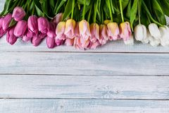 Multicolored tulips on a horizontal wooden background. Top view. Copy spase. Copy spase. Multicolored tulips on a horizontal wooden background. Top view. Copy stock photo
