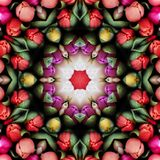 Multicolored tulips. In the form of a picture of a kaleidoscope Royalty Free Stock Photography