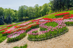 Multicolored tulips in the park Stock Photo