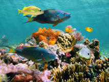 Multicolored underwater sealife. Multicolored sealife in the Caribbean sea with corals, fish, sea worms and water surface in the background royalty free stock images