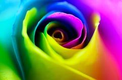 Multicolored very beautiful rose. Rose Bud close-up. Rainbow ros. Colorful beautiful rose. Rose Bud close-up. Rainbow rose. Horizontal photo Stock Image
