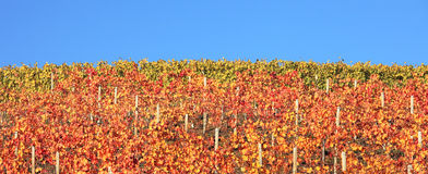 Multicolored vineyard hill. Piedmont, Italy. Royalty Free Stock Image