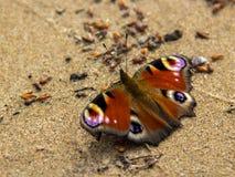 Multicolored vlinder 'Veldmuis ' stock afbeelding