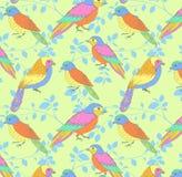 Multicolored vogelspatroon Royalty-vrije Stock Afbeelding