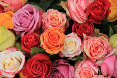 Multicolored wedding roses Stock Photos