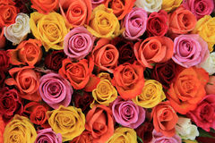 Multicolored wedding roses Stock Image