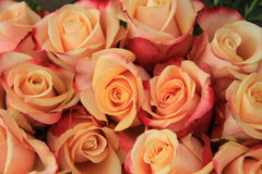 Multicolored wedding roses Stock Photo