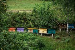 Wooden bee hives in the garden. Multicolored wooden bee hives in the garden royalty free stock images