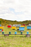 Multicolored wooden beehives at apiary Royalty Free Stock Image