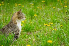 Multicolored young cat enjoying spring on green grass.  royalty free stock images