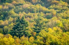 Multicolors treetops during autumn season. Multicolors treetops of a forest during autumn season Stock Image