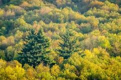 Multicolors-Treetops während der Herbstsaison Stockbild